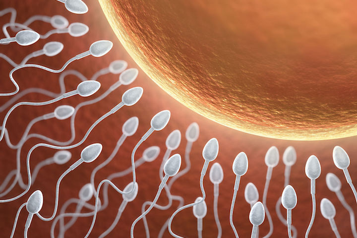 Standard insemination or ICSI: What is the best way to fertilize your eggs?